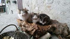 Gigio e Tobia