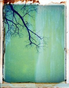 Before the fall by Andy Jenkins, Polaroid 195, Polaroid 669 expired film #polaroid