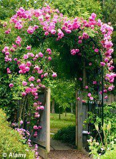 Image result for pink rose garden pinterest