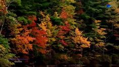 ♡ STAMATIS SPANOUDAKIS - Absences (amazing music) Amazing Music, Good Music, Ancient Greek, Buddhism, Literature, Meditation, Mindfulness, Plants, Literatura