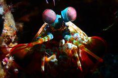 Photos de créatures marines d'Indonésie par Alexis Golding - http://www.2tout2rien.fr/photos-de-creatures-marines-dindonesie-par-alexis-golding/