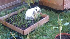 A carrot box especially designed for a bunny :)