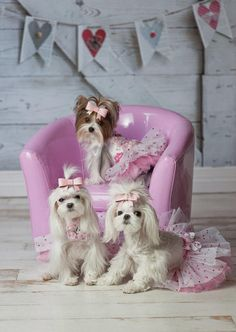 19 New Puppy Love Couture