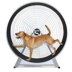 GoPet CS6020 Medium/Large Breed Dog TreadWheel(<150 lbs)