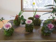 Kokedama Garden Design Ideas, Easy Eco Friendly Home Decorations Ornamental Cabbage, Acrylic Flowers, Eco Friendly House, Succulent Pots, Water Plants, Small Gardens, Ikebana, Container Gardening, Flower Designs