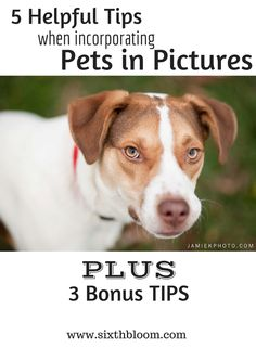 5 Helpful Tips When Incorporating Pets in Pictures, Pets, Pet Photography