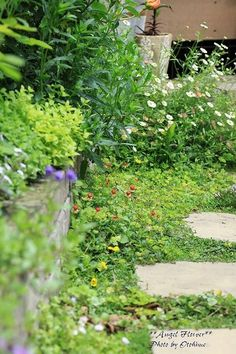 One can have a little Garden wildness, if one gardens one part of the Garden , with a lighter hand. Garden Paths, Garden Planning, Outdoor Gardens, Garden Containers, Shade Garden, Cottage Garden, Plants, Garden Edging, Natural Garden