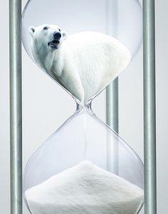 Polar Bear Campaign | Awesome Design Inspiration  굉장히 안타까운 포스터