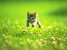 Look out life, here I come! A happy kitten playing in the grass.