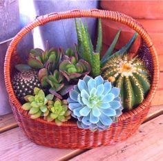 Basket O Cactus/Succulents!
