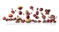 Chestnuts Figure Royalty Free Stock Photography - Image: 36731357