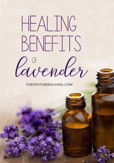 There are so many benefits of lavender that most people may not even know about. Here are some ways to use lavender including fun recipes and tips!