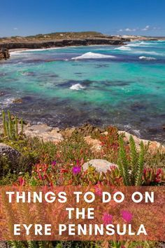 A 6 day itinerary with things to do on the Eyre Peninsula South Australia on a road trip with kids incl Port Lincoln and swimming with Australian sea lions Australia Tours, Visit Australia, South Australia, Australia Travel, Best Beaches To Visit, Places To Visit, New Zealand Travel, Mexico Travel, Spain Travel
