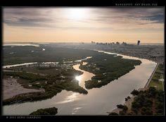 Mangroves - Abu Dhabi