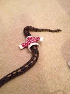 This snake that proves you don't need arms to look thisss ssstylisssh. | 17 Animals Who Look More Fab In Their Christmas Sweaters Than You Ever Will