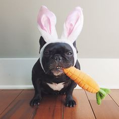 10 Easter Doggies That Will Be Delivering Eggs This Year