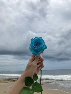 inspirações para fotos tumblr flor azul céu  praia Photos Tumblr, Art Clipart, Fred Instagram, Blue Roses, Blue Aesthetic, Aesthetic Wallpapers, Open Minded, Airline Tickets, Air Travel