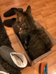 I fits!! Yoohoo!!!! #BonsaiKitten #SirTobias