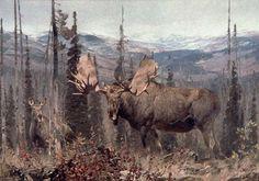 Moose, Carl Rungius (1869 –1959)