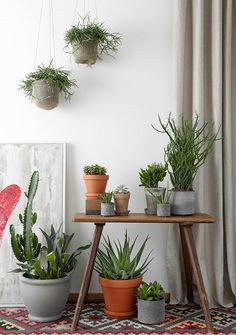 Käytä kasveja sisustuselementtinä. Ne tuovat kotiisi ihanaa elävyyttä ja tunnelmaa. Tiesithän, että viherkasvit puhdistavat myös kotisi huoneilmaa?