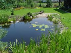 Achieve beautiful, healthy, and blue water with Organic Pond dyes and products! www.organicpond.com