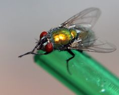 Another take of the fly in a bottle