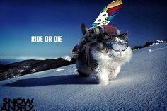 Ride Or Die - love this dude