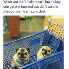 17 Times Animals Took a Ride On a Shopping Cart And Cracked Us Up (Memes)