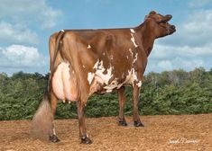Gado Leiteiro, Cattle, Pet Birds, Deer, Horses, Cows, Animals, Milk, Country