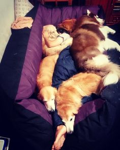The world's best bed!