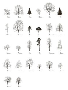 archisketchbook - architecture-sketchbook, a pool of architecture drawings, models and ideas - enochliew: About Trees by Katie Holten A book...