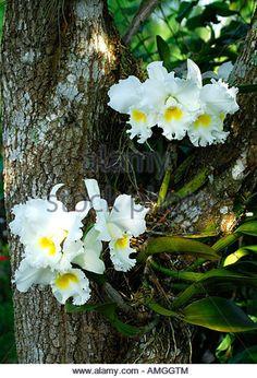 orquidea tronco de arvore - Pesquisa Google
