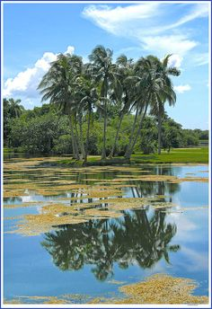 ✮ Fairchild Gardens - Florida