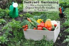 Great gardening tips to help you choose the right organic veggie varieties for your region