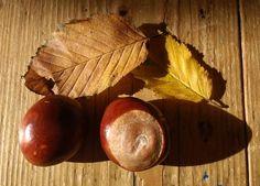 """""""#Autumn"""""""