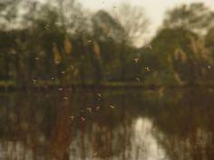 hadas sobre el agua