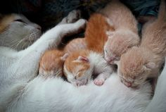 Why Do Cats Purr? Some of the Reasons Might Surprise You | Catster