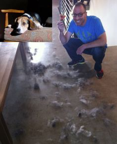 30 Best Dog Brushes For Short Hair Reviews Ideas Dog Brushing Best Dogs Short Haired Dogs
