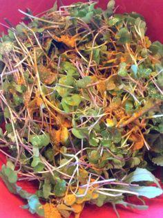 Raw Food Microgreen Salad