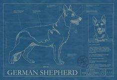 131 best dog blueprints images on pinterest dog art american and animal blueprint company german shepherd dog print malvernweather Gallery