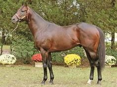 Ole Rebel(1999)Carson City- Velvet Tulip By Valid Appeal. 4x5 To Native Dancer, 5x5 To Nasrullah. 29 Starts 9 Wins 8 Seconds 2 Thirds. $330,200. Won King's Court S, Speed H, Thanksgiving H, 3rd Colonel Power H. Entered Stud In 2007 In La.