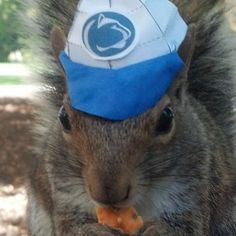 Sneezy The Squirrel Captures The Heart Of Penn State And The Internet With Many Hats (PHOTOS)