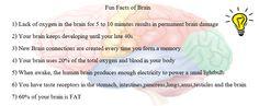 #Fun #Facts Of #Brain