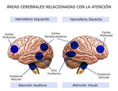 atención auditiva y visual