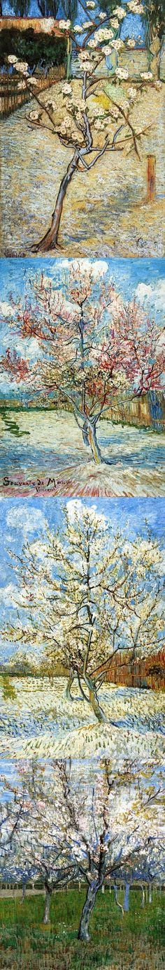 Vincent van Gogh - Blossoming Pear Tree series