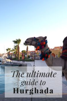The Ultimate Guide To Hurghada, Egypt // Click through to read the whole post! www.girlxdeparture.com
