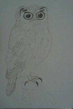 luonto piirustus kuvia: Helmipöllö liikuvat päivän valossa  ja öisin hutelin yksin