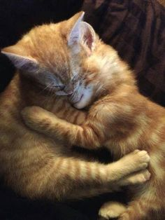 18 cuddly animals to make you smile - so adorable! Cute Cats And Kittens, I Love Cats, Crazy Cats, Cool Cats, Kittens Cutest, Funny Kittens, Baby Animals, Funny Animals, Cute Animals