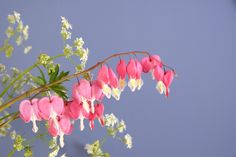 Dicentra or bleeding heart Bloom, Heart, Flowers, Plants, Home Decor, Decoration Home, Room Decor, Plant, Royal Icing Flowers