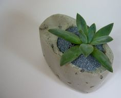 Asymmetrical Cement Planter with Echevaria by dachshundinthedesert, $25.00